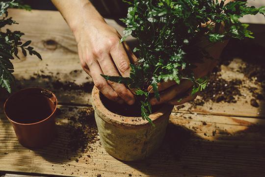 viveros-fadura-alquiler-plantas
