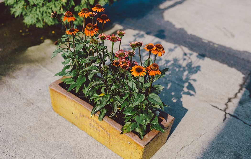 cuidados básicos para plantas de interior