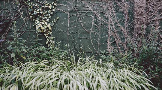 viveros-fadura-jardin
