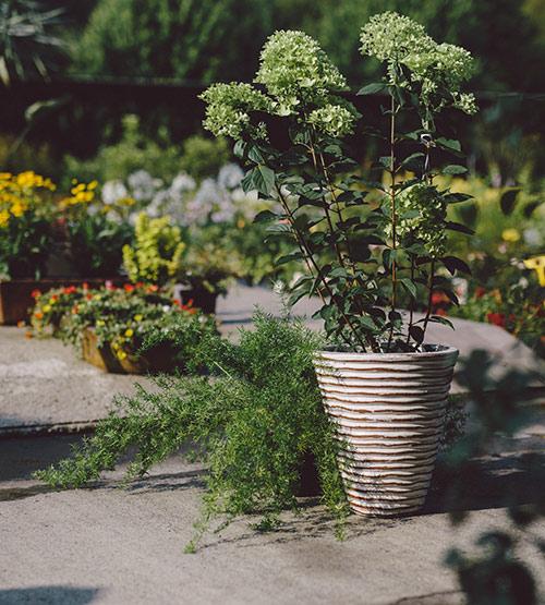 viveros-fadura-plantas