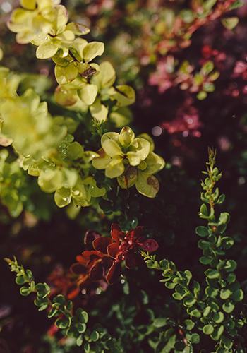 viveros-fadura-plantas-arbustivas