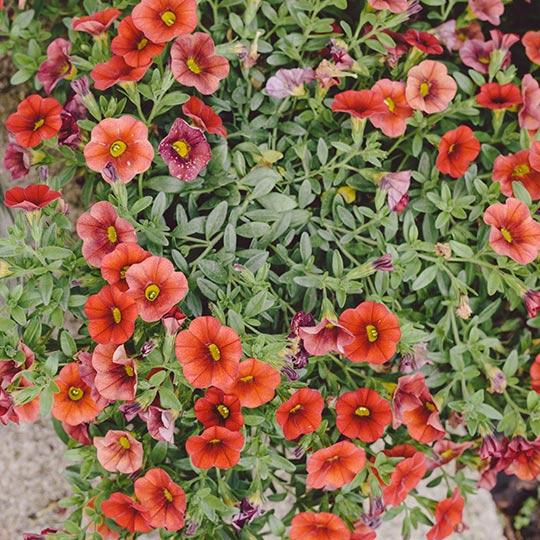 viveros-fadura-plantas-temporada