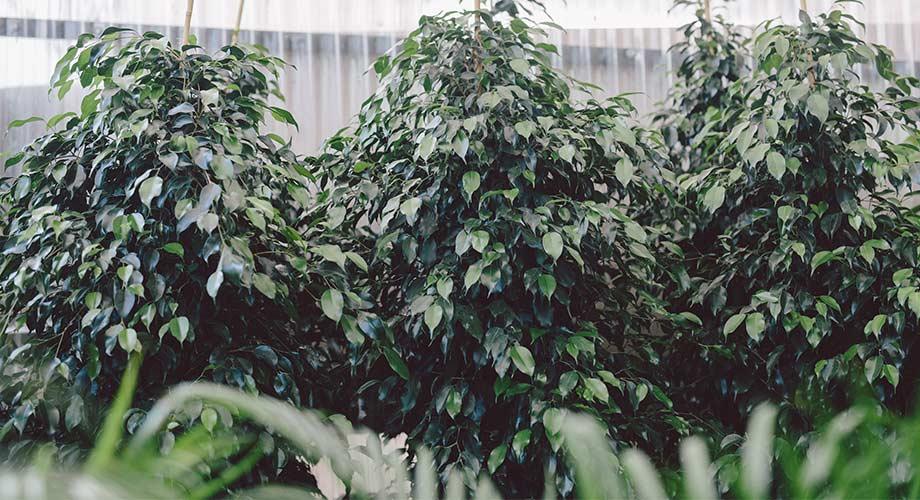 viveros-fadura-plantas-verticales